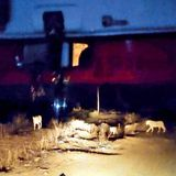 Gujarat News: Baby born in ambulance as lions block road | Rajkot News - Times of India
