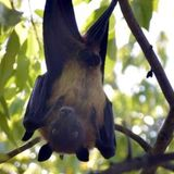 Over 200 bats found dead in a Bihar village, doctors collect their swabs for testing