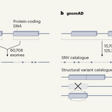Thousands of human sequences provide deep insight into single genomes