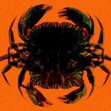 The Deepwater Horizon spill created horrific mutant creatures