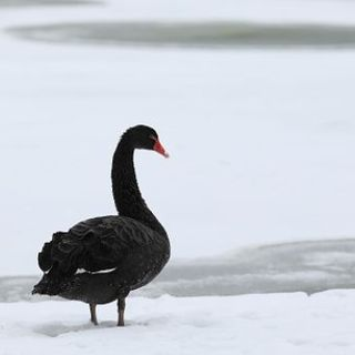Taleb-Asness Black Swan Spat Is a Teaching Moment: Aaron Brown - BNN Bloomberg