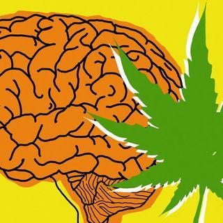 Scientists discover the reason why anxious people smoke marijuana