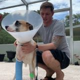 'I'd fight tooth and nail for him': Wesley Chapel man fights off gator to save dog