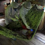 Virus Cases Top Nine Million As WHO Says Pandemic 'Accelerating'