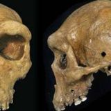 The 'Ghost' of an Unknown Extinct Human Has Been Found in DNA of Modern West Africans