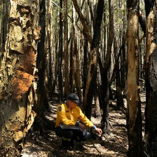 NSW fires: Lindfield Road blaze finally out after 210 days