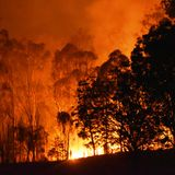 Will Australia's forests bounce back after devastating fires?
