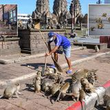 Monkeys rampage in footage from Thai city over-run by sex-mad macaques
