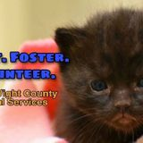 Isle of Wight Animal Shelter in urgent need of canned cat, kitten food