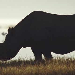 Earth's Sixth Mass Extinction Isn't Just Happening, It's Accelerating