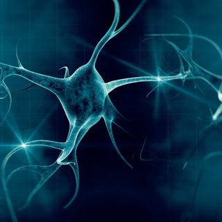 Yale captures first ever video of brain clearing out dead neurons