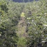 Some South Jersey Farmers Won't Let Seasonal Workers Be Tested for COVID-19 | NJ Spotlight