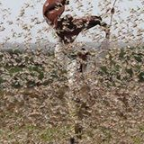 The Locust Plague in East Africa Is Sending Us a Message, And It's Not Good News