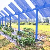 Cash-strapped farms are growing a new crop: Solar panels