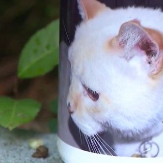 Atlanta Family's Dead Cat Gets Voter Registration Application in the Mail